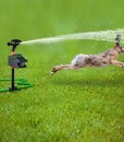 Hoont-Powerful-Outdoor-Water-Jet-Blaster-Animal-Pest-Repeller-Motion-Activated-Blasts-Cats-Dogs-Squirrels-Birds-Deer-Etc-Out-of-Your-Property-0-4
